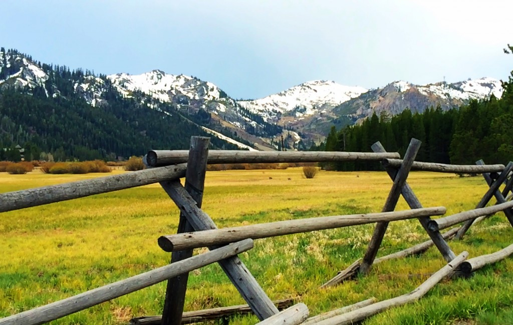 Meadow and Mountain