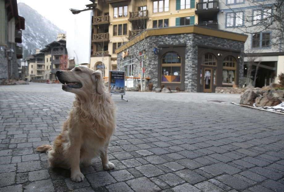 Squaw Valley Dog